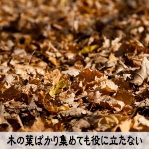 木の葉ばかり集めても役に立たない